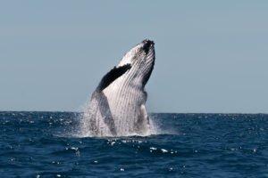 Ricerca e Avvistamento Balene